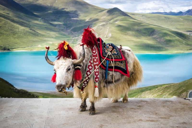 Тибет пристига в Карлово с уникална изложба
