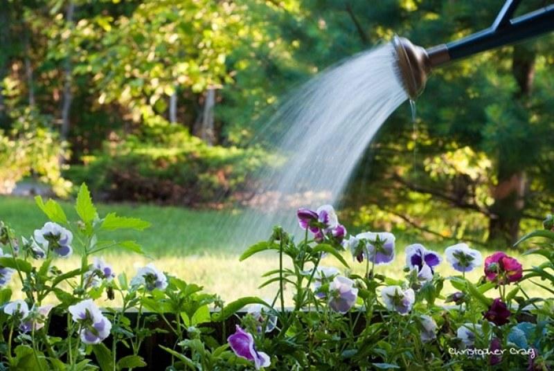 Засилва се контролът върху ползването на питейна вода в Перущица
