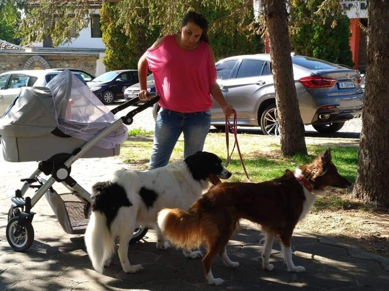 Млада майка от Карлово храни и кастрира бездомни кучета и котки