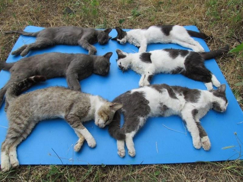 Жестокост! Отровиха шест домашни котки в двор в пловдивско село