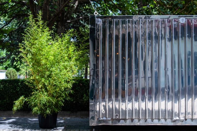 Fluca показва през август самостоятелна изложба на Татяна Данеберг