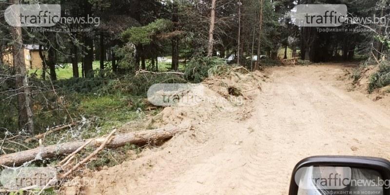 След сигнал на TrafficNews: Какво установи Дирекцията по горите след изсичането на борове и елхи край Перущица?