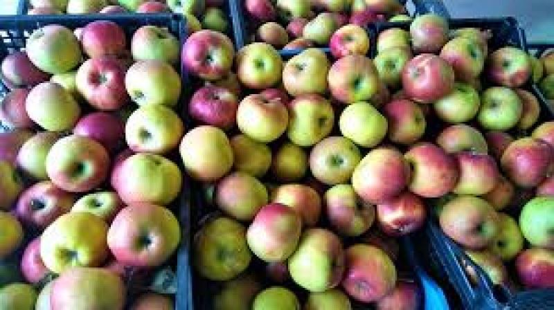 Спипаха мъж и жена от Съединение, откраднали ... ябълки