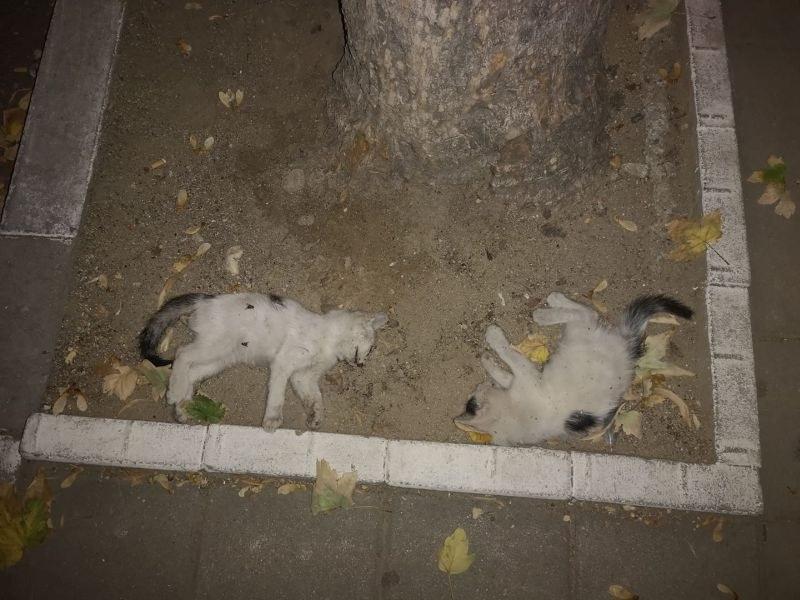 Отново тровят котки в Асеновград