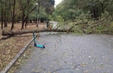 Дърво падна върху дете в парк Лаута