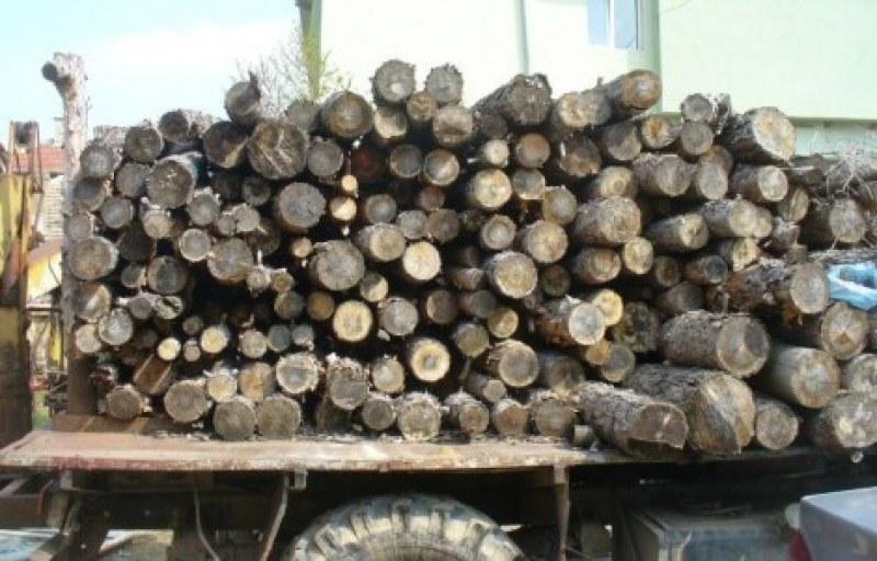 Закопчаха мъж заради кражба на дърва в Пловдивско