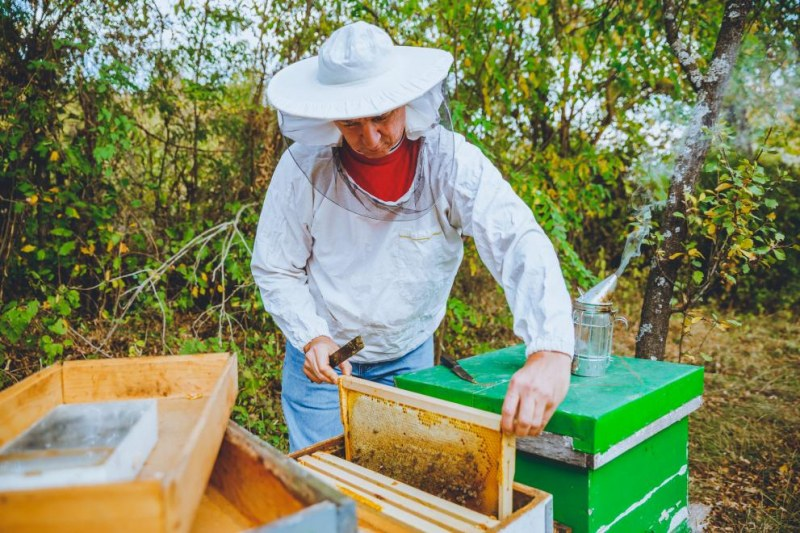 Започва приемът за подпомагане по пчеларската програма за 2021