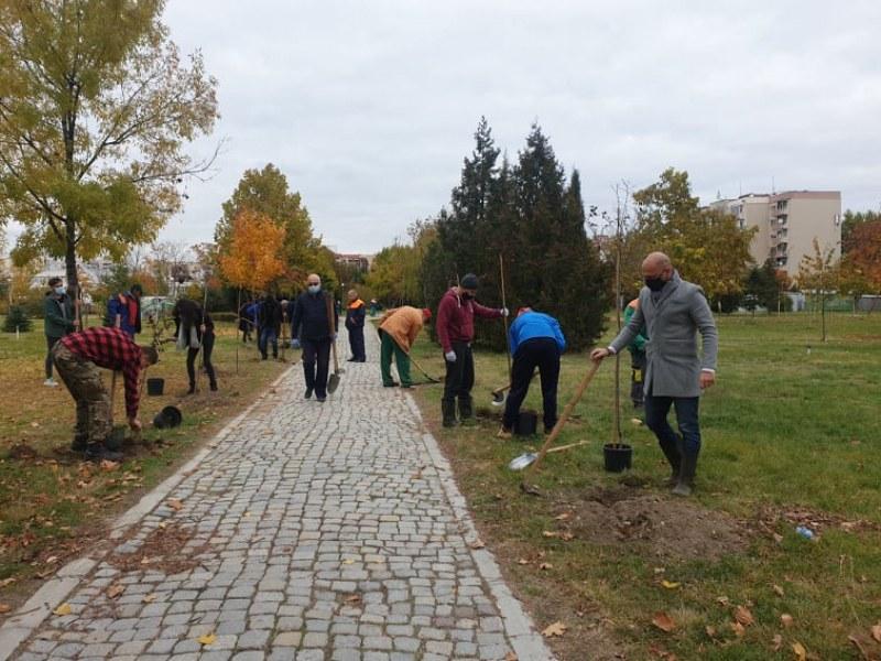 70 нови млади дръвчета обогатиха парк в Тракия