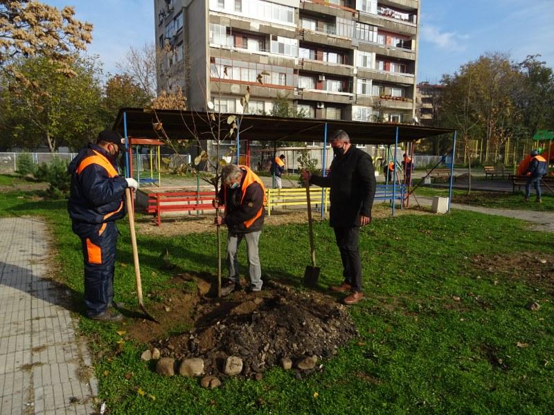 """Нови дръвчета посадиха край детска площадка в """"Северен"""""""