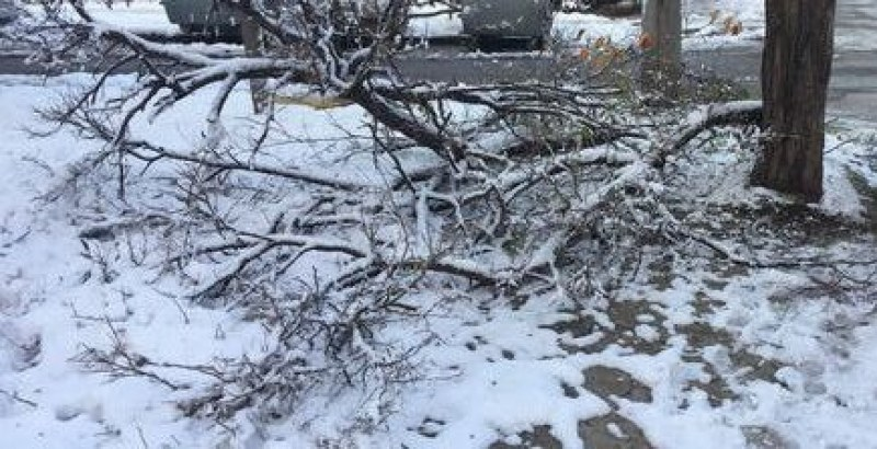 Пловдив осъмна с паднали клони заради снега, подадени са 20 сигнала