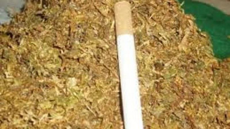 Акция в Рогош! Откриха безакцизен тютюн и цигари