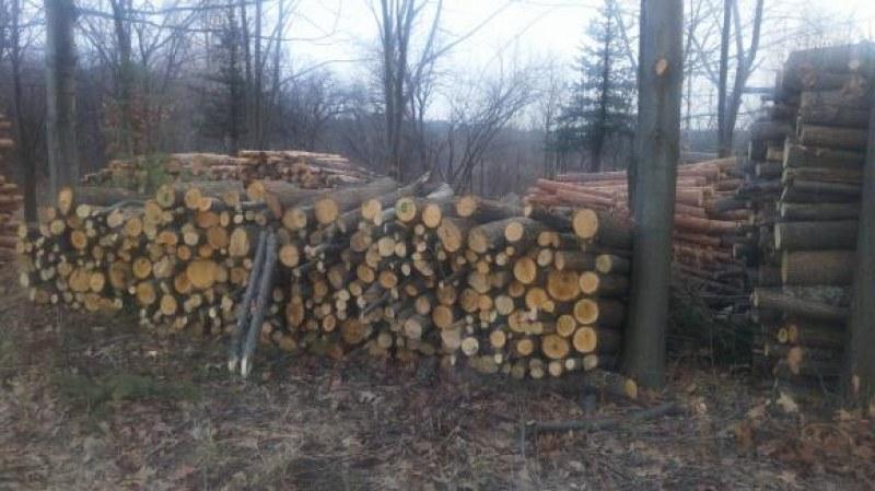 Жителите на Кричим могат да купят дърва за огрев направо от гората