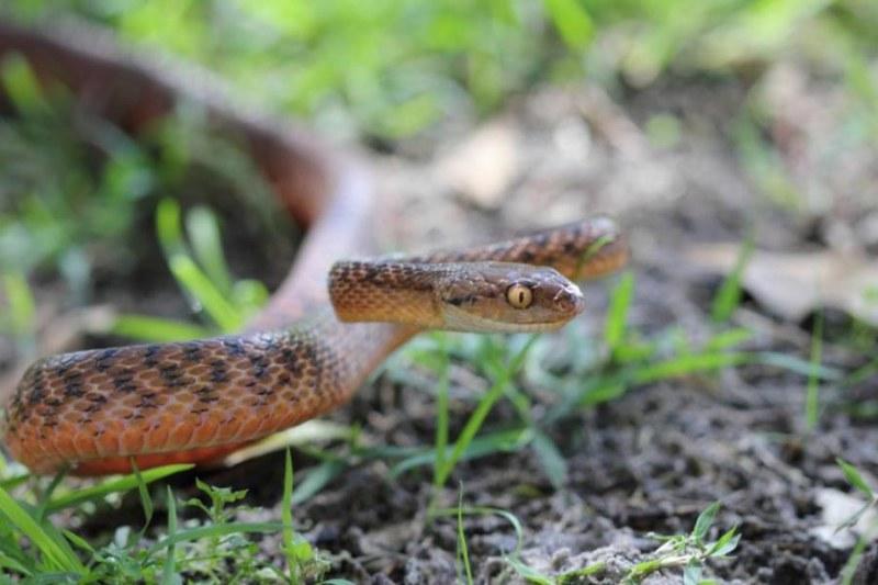 Змии изпълзяха в Пловдивско със затоплянето на времето