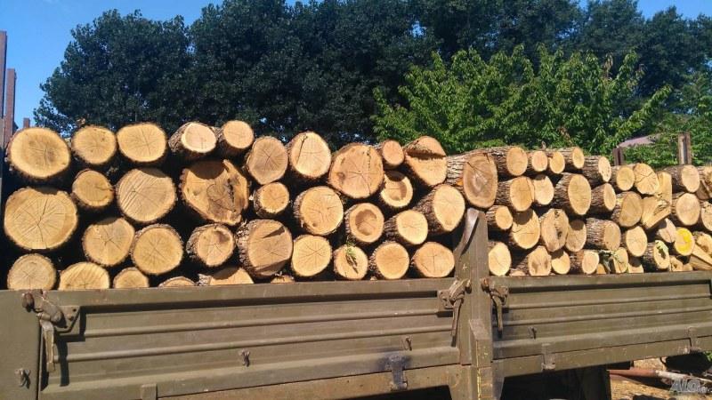 Жителите на община Съединение могат да купят дърва за огрев от горския фонд