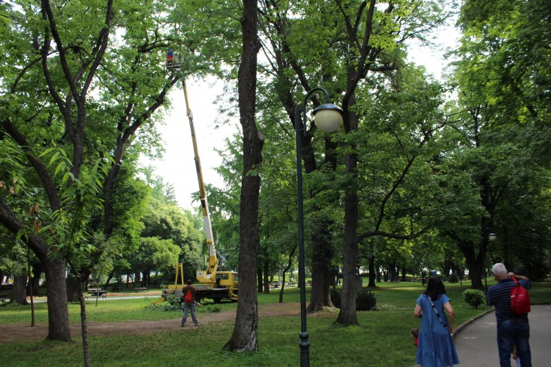 Лекуват по нов метод дървета в Цар Симеоновата градина