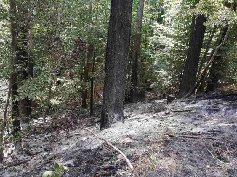 Пожарът над село Югово отново се разрасна