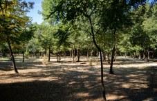 """Мисия """"Лаута"""" - ще има мащабна акция за почистване на парка"""
