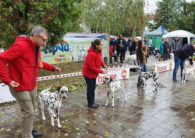 Четириноги красавци се състезаваха на киноложка изложба в Първомай