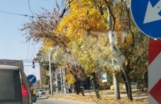 """Махат от днес тролейбусни жици в """"Източен"""", въвежда се временна организация на движението"""